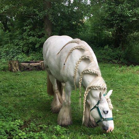 Foto de White Horse Gypsy Caravans