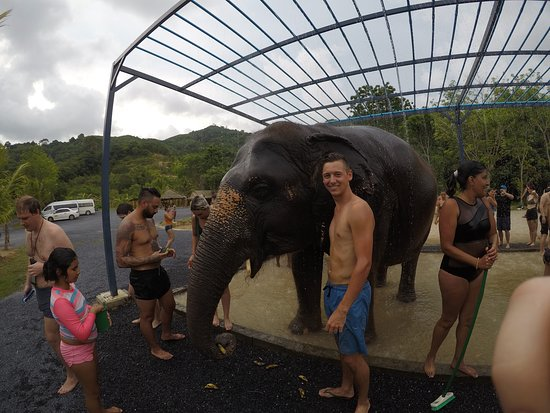 Green Elephant Sanctuary Park : Cuddles