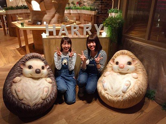 Hedgehog Cafe Harry Yokohama: お洒落な店内に優しくて可愛いスタッフさんがお待ちしております♪