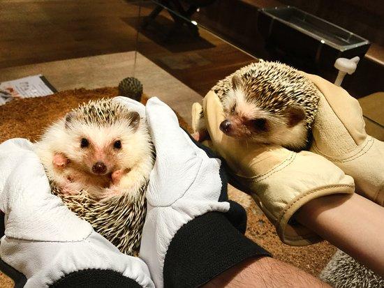Hedgehog Cafe Harry Yokohama: 抱っこが大好きなハリちゃんがいっぱい!!