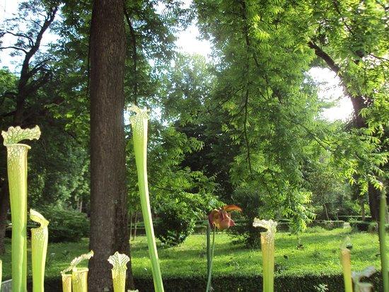 Giardino dei semplici piante carnivore e panorama foto di museo