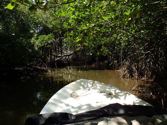 Bentota River: красота!
