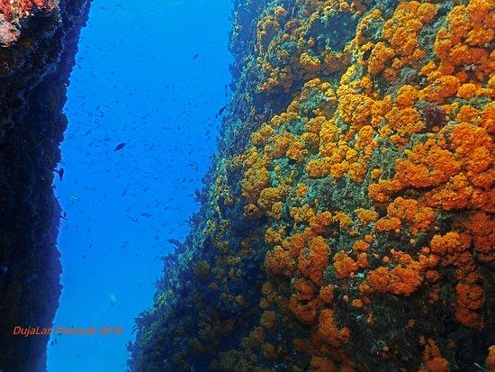 Paisaje submarino en La Rijana, una inmersión excepcional por su variedad y belleza.