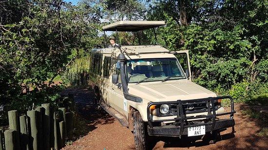Untamed Safaris: Entering serengeti
