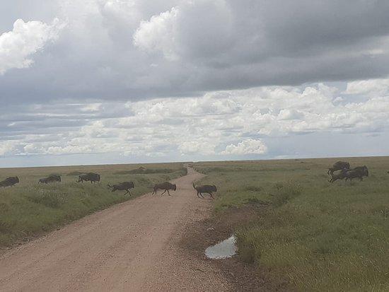 写真Untamed Safaris枚