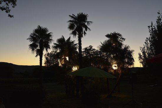Domaine le Grand Jardin: bosquets de palmiers