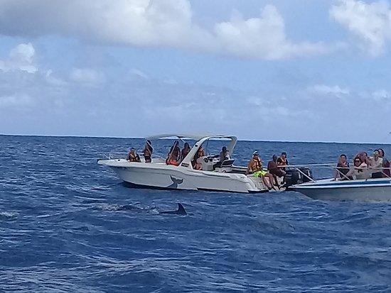 写真Dolphin Encounter枚
