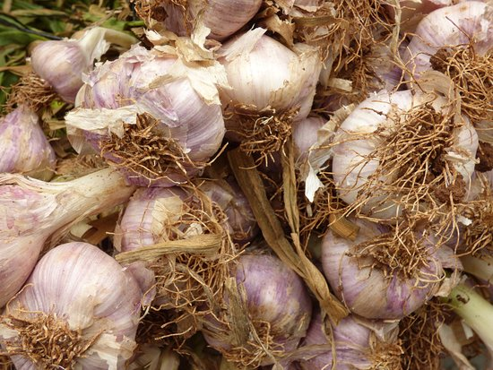 Mahane Yehuda Market: Enough garlic to terminate Dracula!