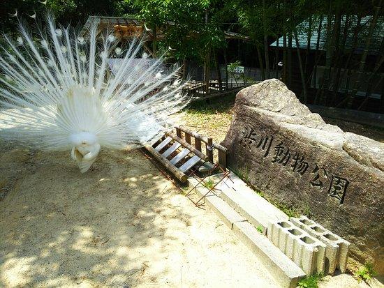 Shibukawa Zoo