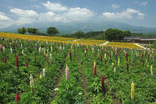 Nasu Flower World: 6/4日撮影