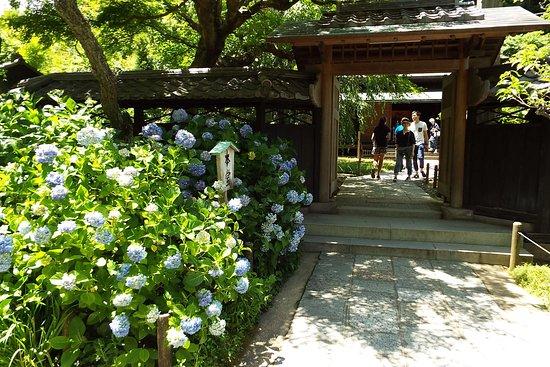 Tokeiji Temple照片