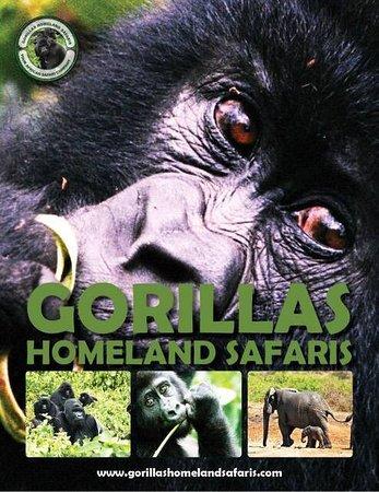 Gorillas Homeland Safaris照片
