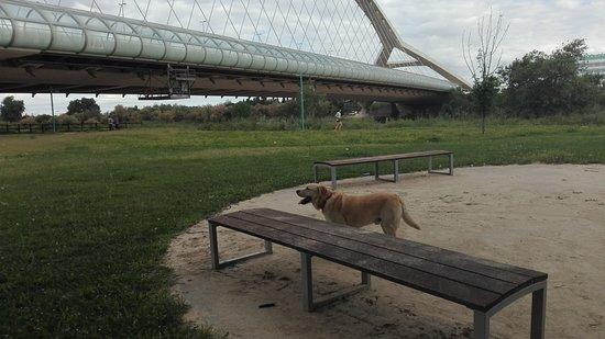 El Ebro: Labrador con puente.