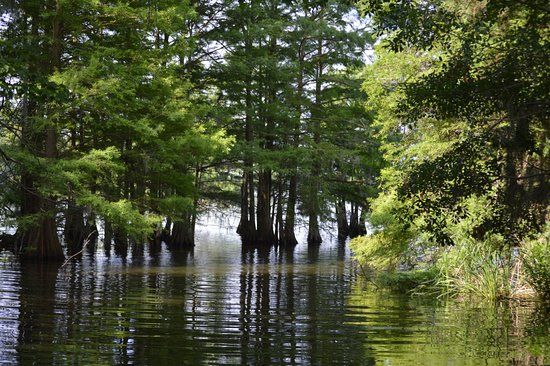 Santee National Wildlife Refuge: Cypress along Lake Marion