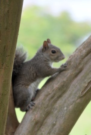 Santee National Wildlife Refuge : Cute squirrel at visitor center