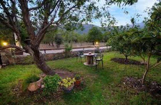 Mesudiye, Tyrkia: Bahçe