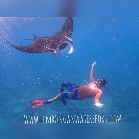 Lembongan Water Sport: swim with manta rays nusa penida