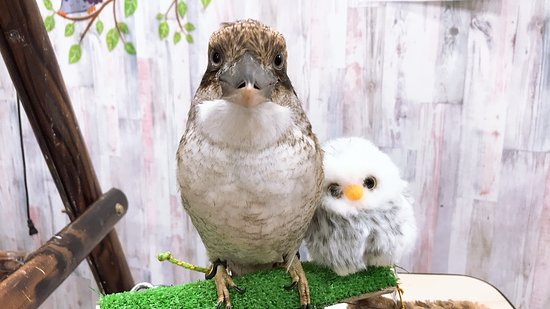 Owlpark Owl Cafe Ikebukuro tokyo – fénykép