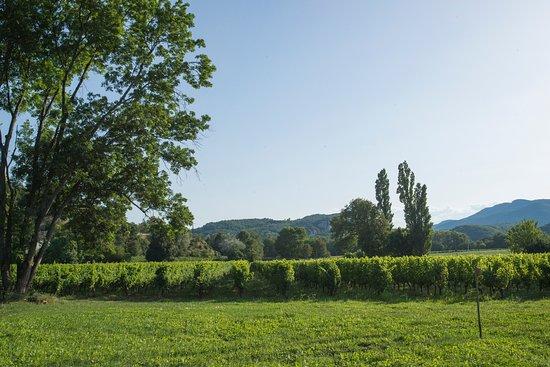 Domaine le Grand Jardin: vue sur le vignoble
