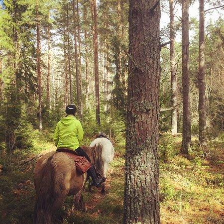 Alvkarleby, Swedia: getlstd_property_photo