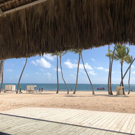 The Level at Meliá Caribe Beach照片