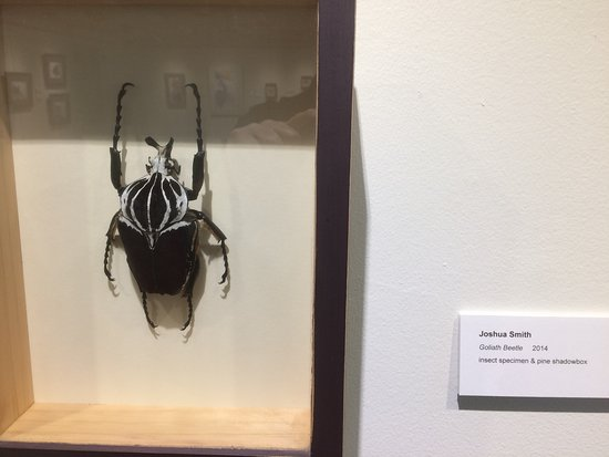 The Art Museum of Greater Lafayette: Bug theme.