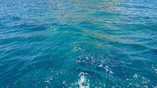 写真Venus Sea Cruises枚