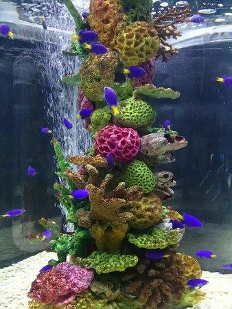 马尼拉海洋公园照片