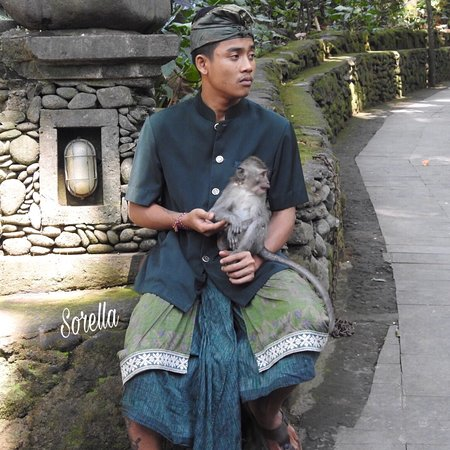 Bali Monkey Forest, Mengwi Temple, and Tanah Lot Afternoon Tour ภาพถ่าย