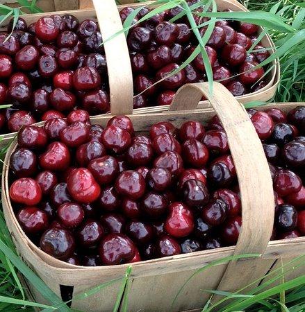 20 Valley Harvest Farms: Sweet Cherries!