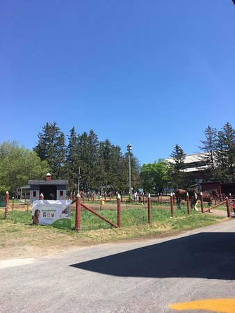 Musée de l'agriculture et de l'alimentation du Canada : Kids can see the animals in the barn and outdoors