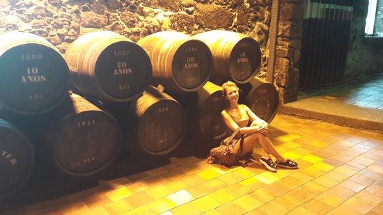 Não deixem de conhecer as Caves de vinho do Porto com degustação!