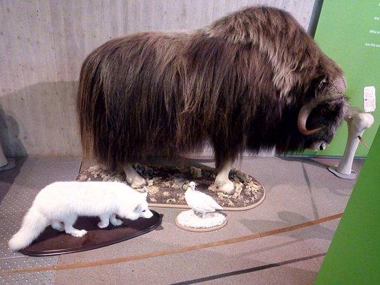 Neanderthal Museum照片