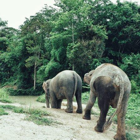 Phuket Elephant Sanctuary照片