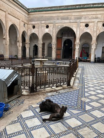 Glaoui Palace: dog having fun