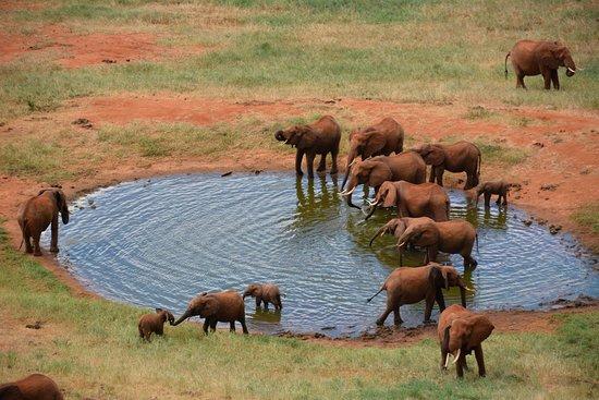 Damma Tours & Safaris: Löwe in Amboseli