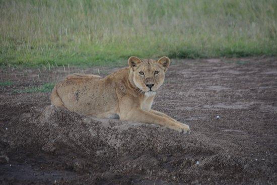 Damma Tours & Safaris ภาพถ่าย