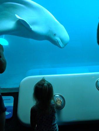 Shedd Aquarium ภาพถ่าย