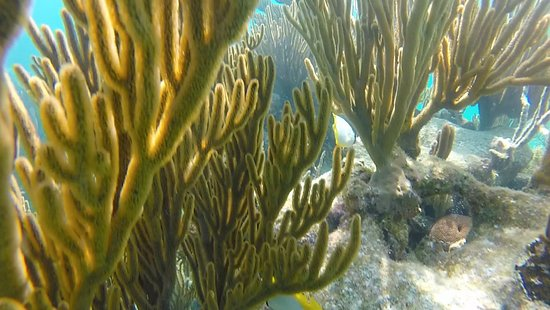 Seemore Adventures – Dive & Adventure Shop : Seemore Adventures Full Day Snokel tour to Glover's Atoll