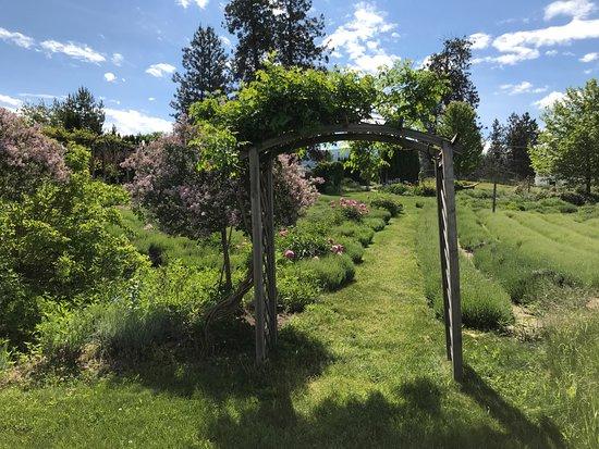 Okanagan Lavender & Herb Farm: A beautiful stroll through a great garden