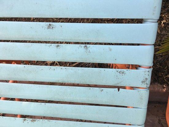 อควาติกา (ซีเวิลด์ส วอเทอร์ปาร์ค): Just another mildewed chair