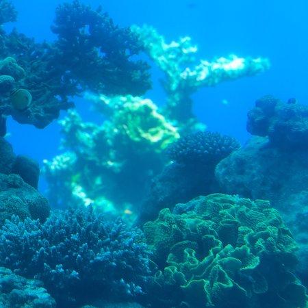 Underwater Observatory Marine Park照片