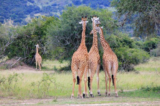 New Horizon Tours and Services: You will spot this in Akagera Park