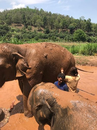 Elephant Nature Park: Mud bath