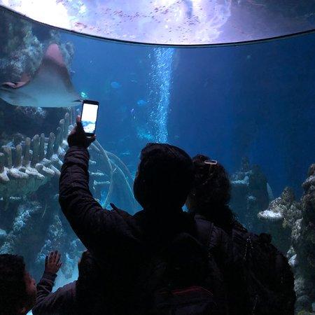 Ảnh về SEA LIFE London Aquarium