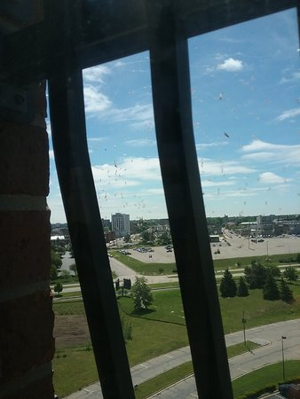 Shoreline Inn & Conference Center, an Ascend Hotel Collection Member: Spider webs with bugs