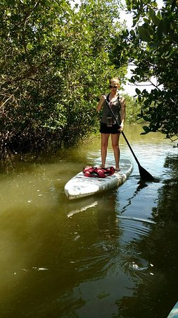 Paddle Out Adventures: Paddle boarding through the mangroves