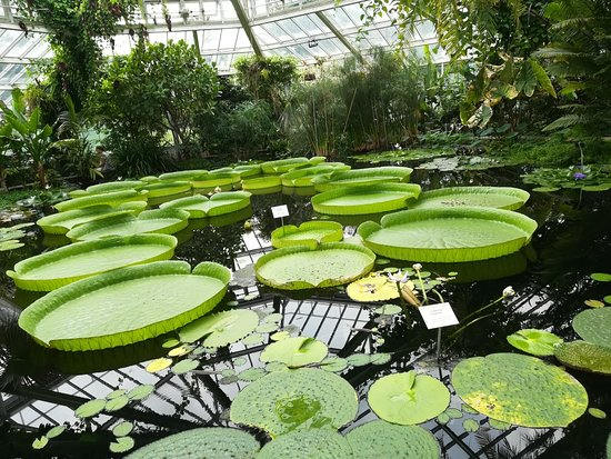Botanic Garden Meise