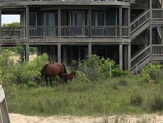 Wild Horse Adventure Tours : Mom and new baby