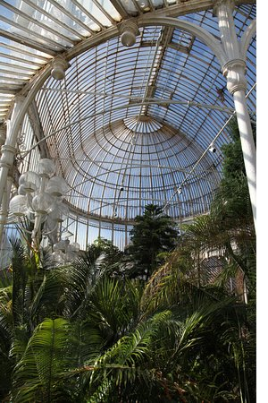 Botanic Gardens: Greenhouse from the inside